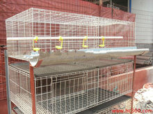 types of layer chicken cages for zimbabwe poultry farms