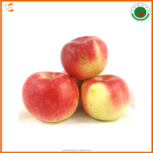 wholesale bulk fresh red gala apple fruit