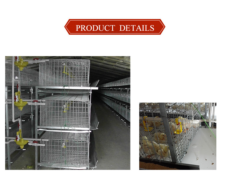 Good quality chicken farm price battery cages for broiler