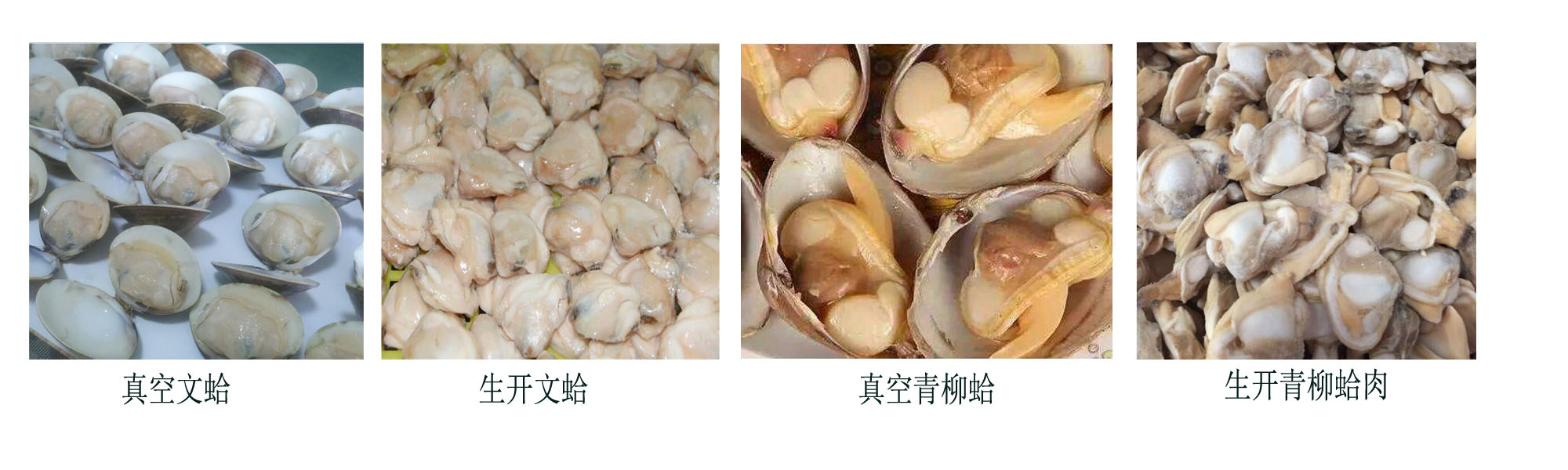 high quality frozen boiled whole mussel