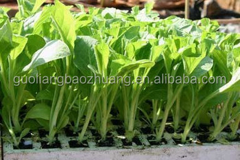 seed trays for sale hydroponics grow tray supplier for sale