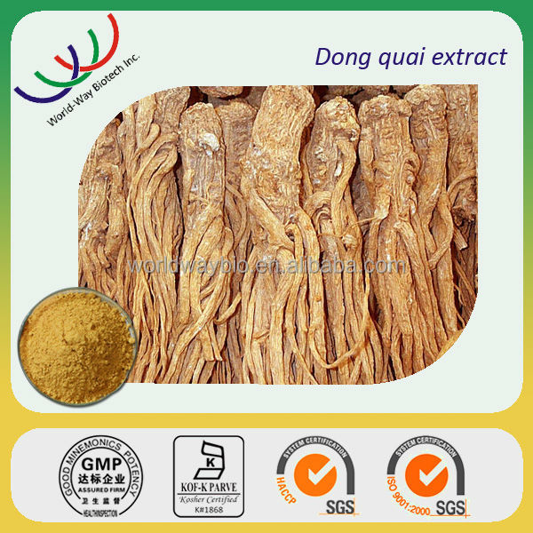 Free sample ! 100% Natural Chinese Angelica extract /Dong Quai extract