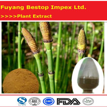 Wen Jing Hot Sale GMP Certificate 100% Pure Field Horsetail Extract