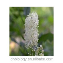 Black Snakeroot Extract Black Cohosh Extract with Triterpene Glycosides black cohosh plant extract