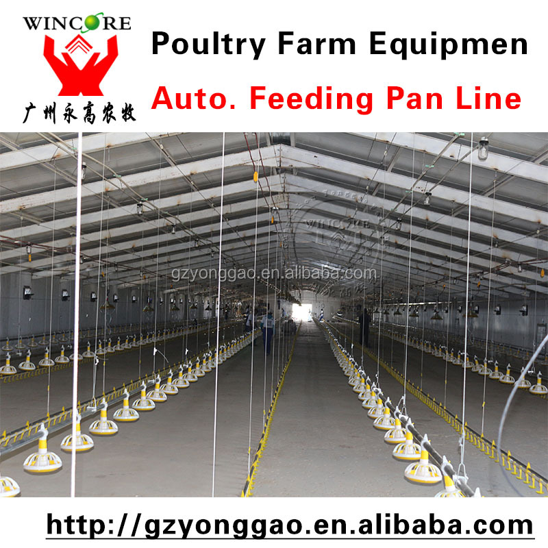 chicken feeding system automated chicken system