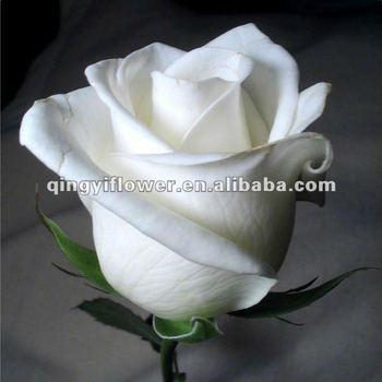 Wholesale Natural White Long Stem White Roses Export Fresh Cut