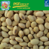 Hot Sale fresh and healthy light speckled beans