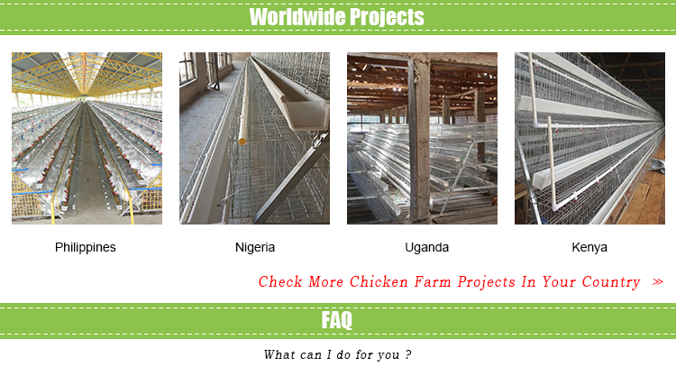 4 tier 120 birds chicken layer cages price battery cage design chicken transport cage for uganda ghana farm