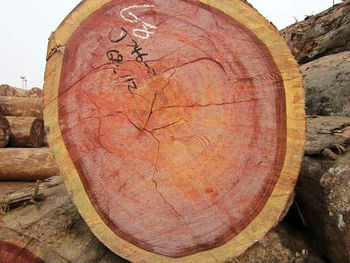 Rosewood Lumber Logs Buy Rosewood Logs Product On Alibaba Com