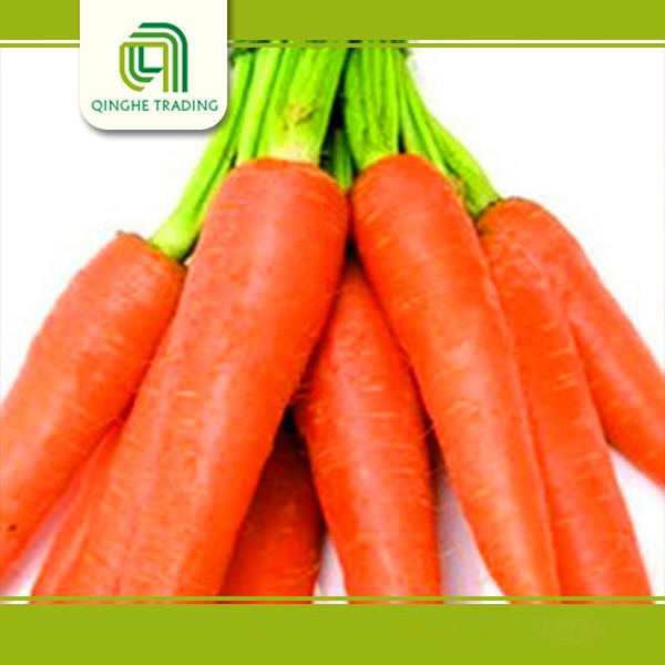 wholesale cheap carrots purple carrots with high quality