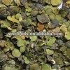 2014 hot selling Chinese herbal medicine dried duckweed