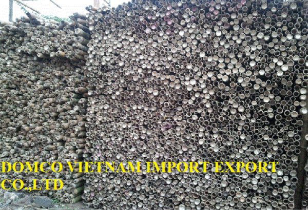 Bamboo Poles-Natural raw eco-frienly, Sanded, Solid, Straight, Tam vong bamboo pole, Sell, Wholesale, -building construction