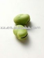 light green broad bean