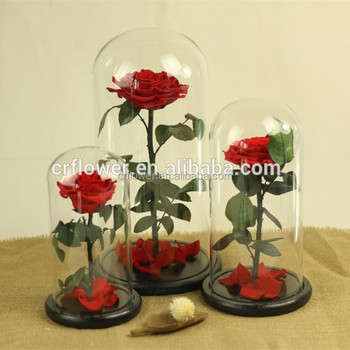 Top Sell Real Long Lasting Eternal Preserved Flowers Rose In Glass 1020cm Flower