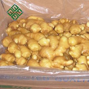 chinese Market Price ginger 300g And Up for sale