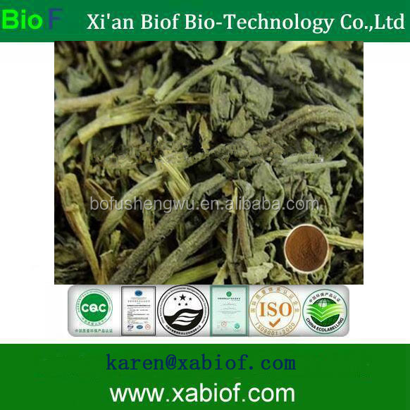 Natural Indigowoad Leaf Extract Folium Isatidis Extract