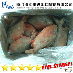 China Frozen Red Pomfret Fish / Red Pacu (Colossoma Brachypomum)