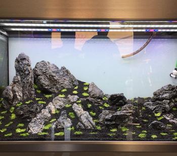 Fish Aquarium Decoration Dragon Qinglong Stone For Sale Buy Fish