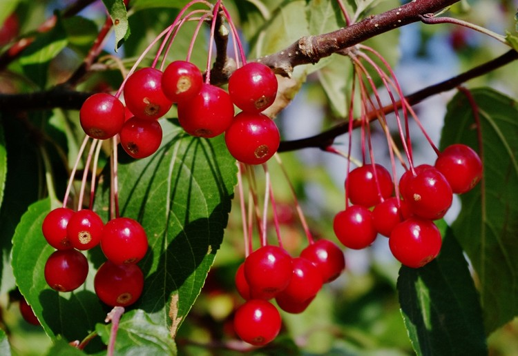 100% Natural Fresh Fruit Powder Food Additive Cranberry Fruit Powder