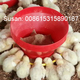 Automatic Poultry feeders and drinkers for broilers and breeders