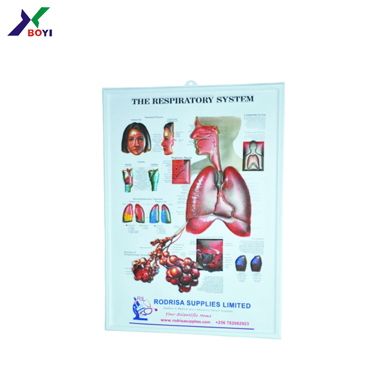 3d Anatomical Chartbody Anatomy Chart3d Embossed Pvc Pop Up