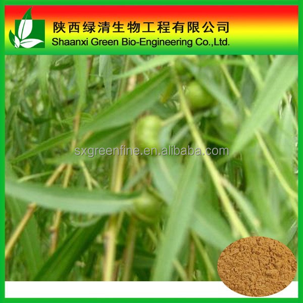 White willow bark extract/Salix babylonica/15% 25% 50% 98% salicin/White willow extract