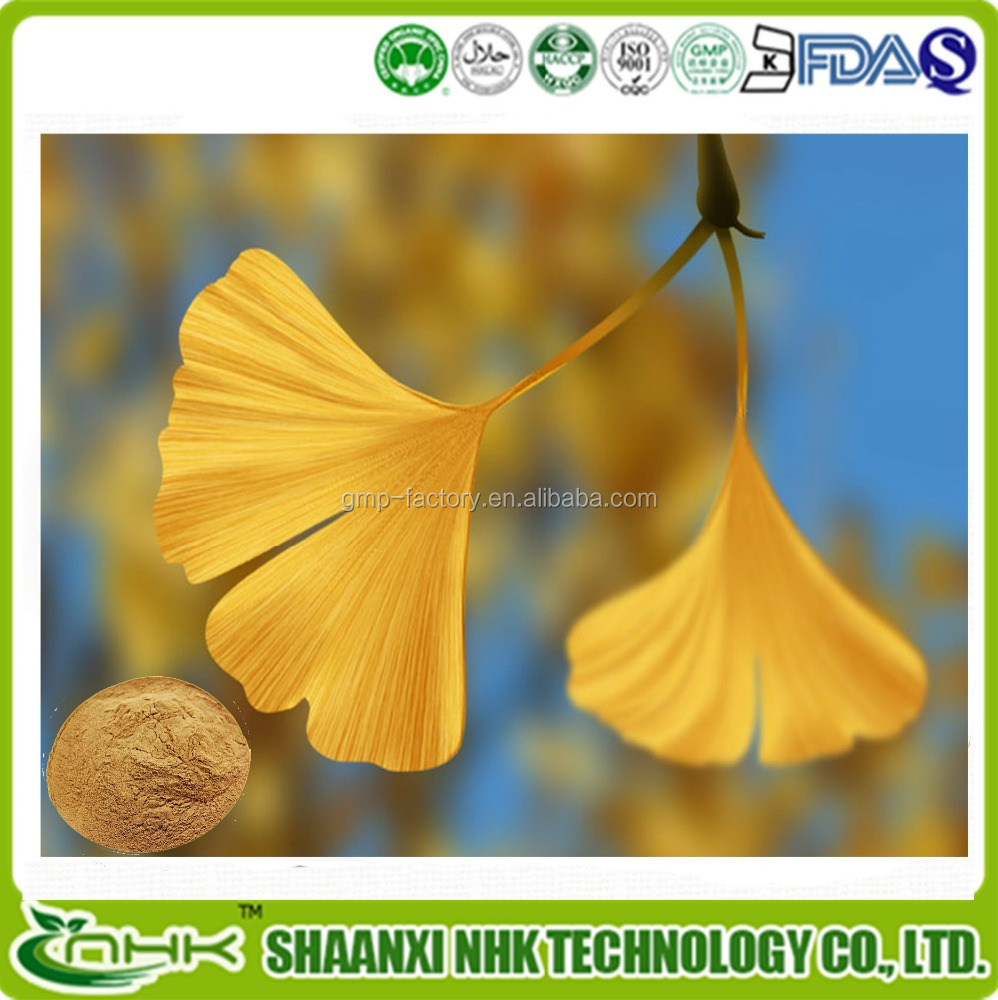 Free samples/Organic ginkgo biloba/ginkgo biloba herbal extract/dried ginkgo biloba leaves