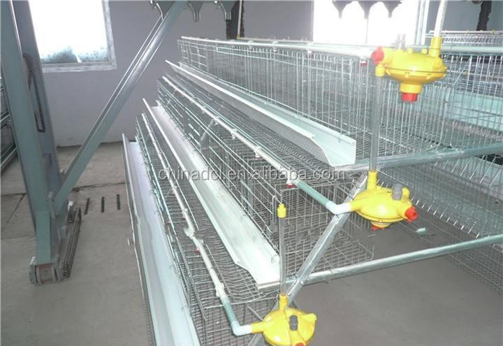 layer chicken better cage