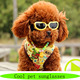 Amazon 2016 dog grooming, innovative pet products, dog products company