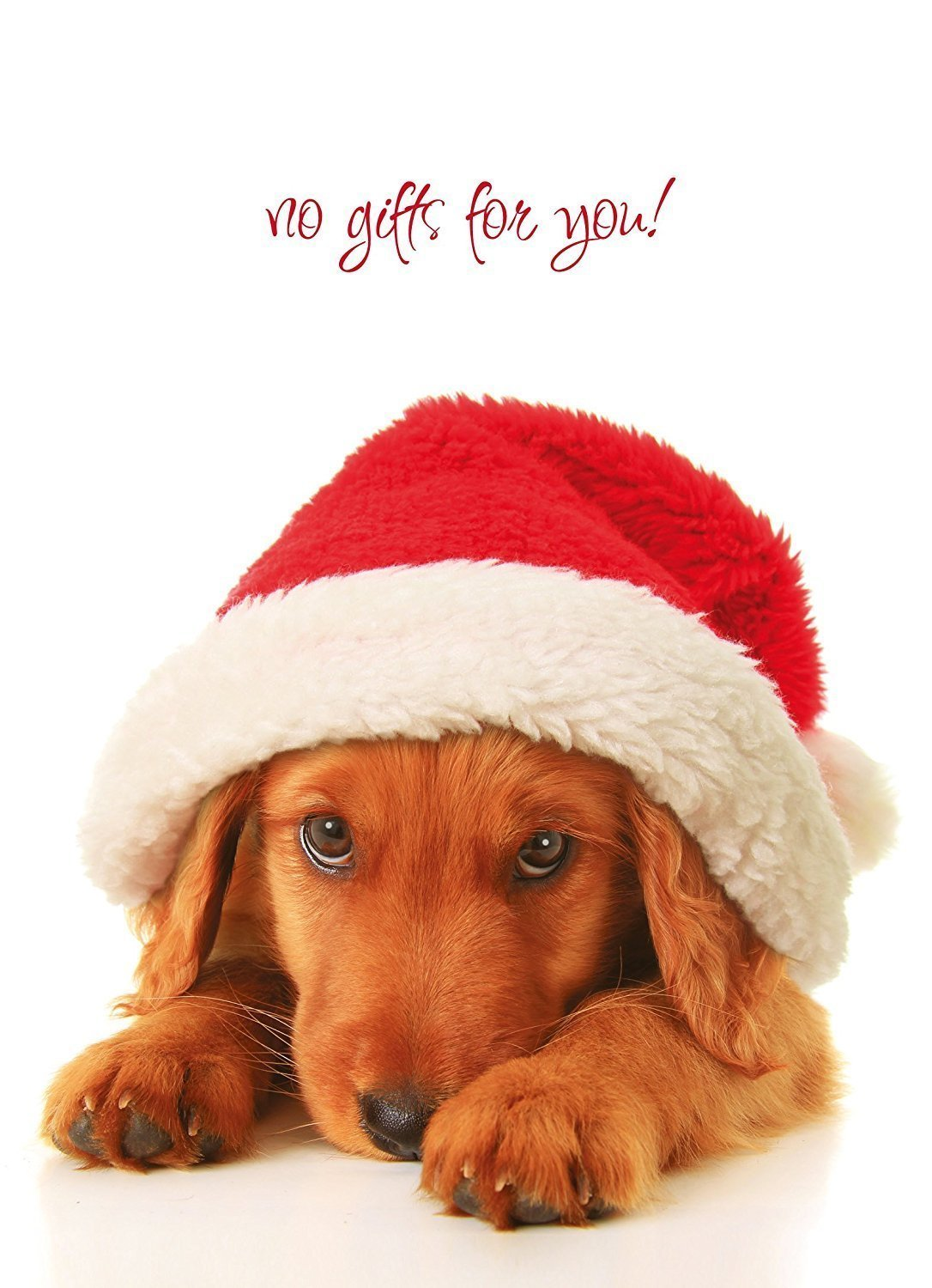 Cheap christmas cards pets find christmas cards pets deals on line get quotations 16 pack of 1 design per order cute adorable christmas holiday animal pets dog or m4hsunfo