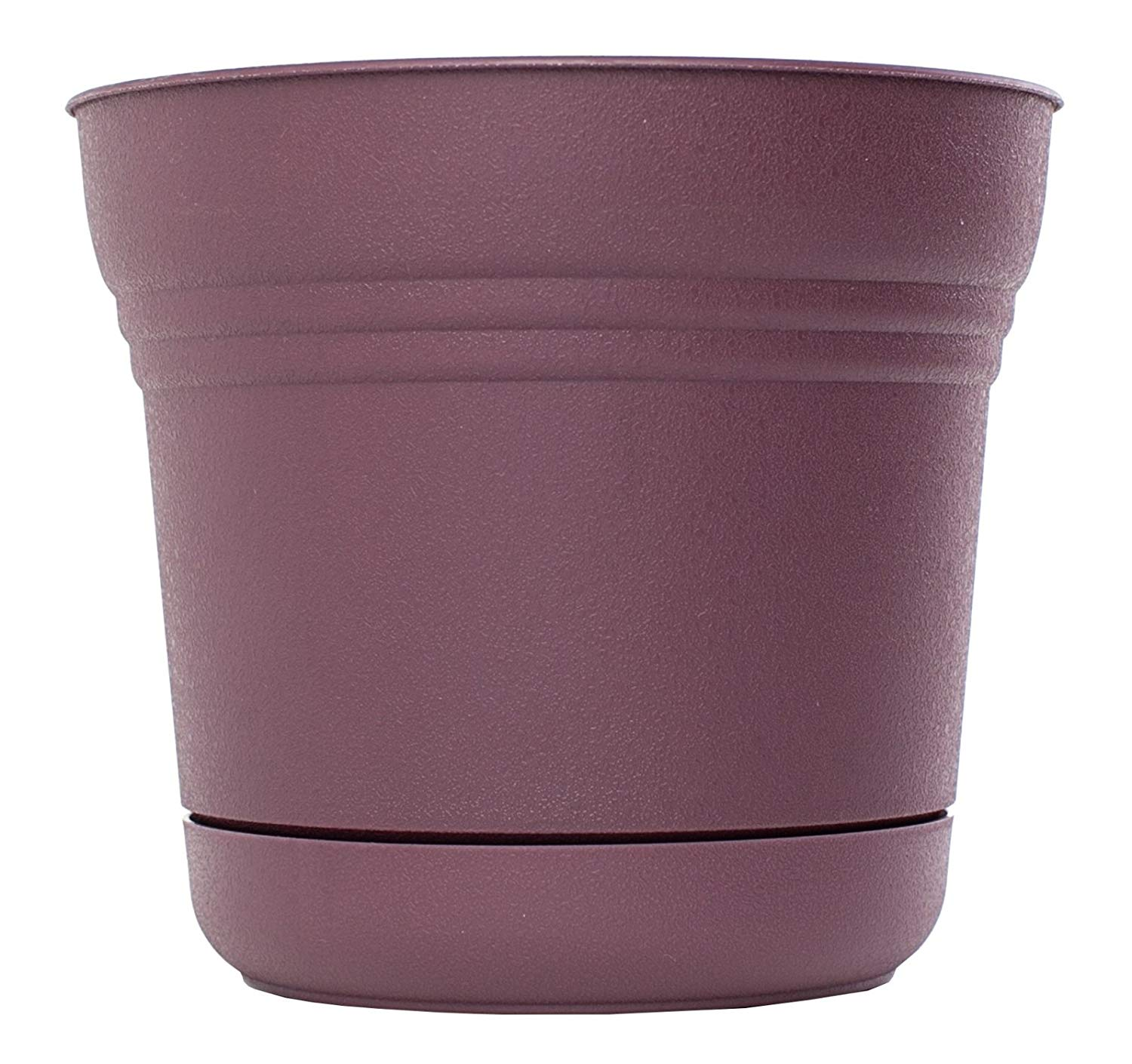 "Saturn Round Pot Planter Color: Exotica, Size: 6.5"" H x 7.4"" W x 7.4"" D"