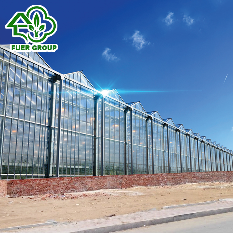 Agriculture Large Size Venlo Type Multi Span Glass Greenhouse