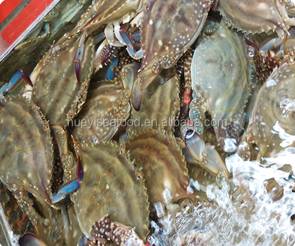 grade A fresh frozen swimming crab for hot sale