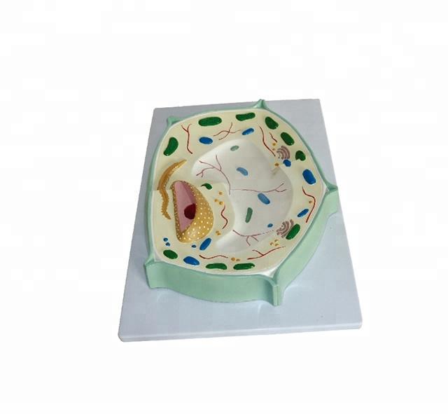Finden Sie Die Besten Modell Pflanzenzelle Hersteller Und