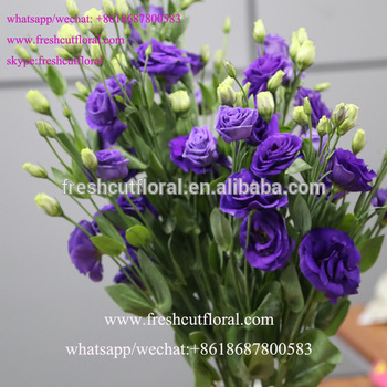 Best Online Export Fresh Cut Eustoma Chinese Name , Beautiful Flowers Red Roses For Wedding Bouquet Arrangements