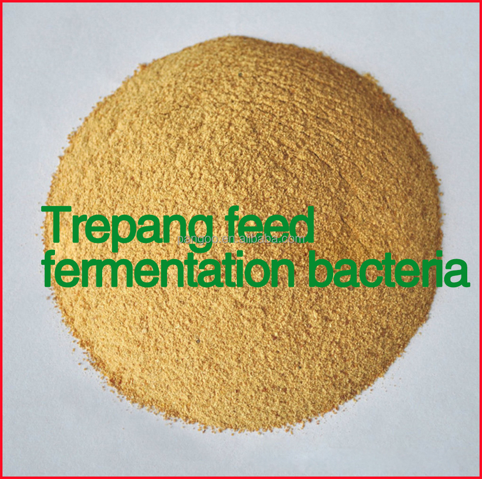 trepang feed fermentation bacteria , trepang formula feed and algae powder