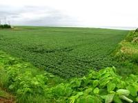 Over 3000 acres Farm lands for joint venture or long lease