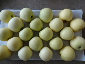 Golden delicious apple fruit price