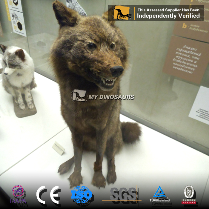 MY Dino-AA40 Animated Life Size Animal Wolf 3D model