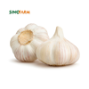 /product-detail/new-crop-fresh-natural-pure-white-garlic-62045551870.html