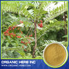 China cheap Tongkat Ali Extract/Tongkat Root Extract 200 1