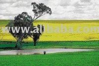 Vegetable Oil, Biodiesel Equipments