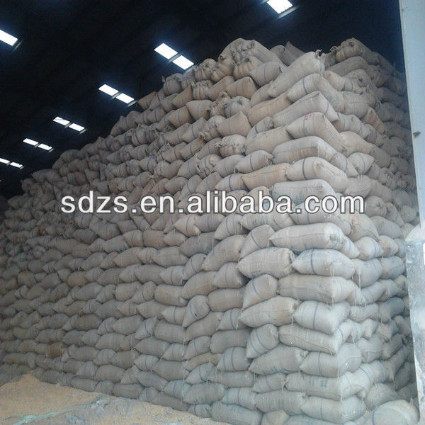 yellow corn grain both for people consumption and animal feed