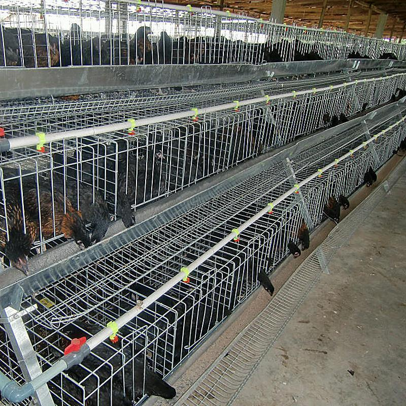 Commercial Chicken House commercial chicken houses, commercial chicken houses suppliers and