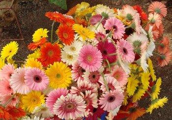 Cut Flowers