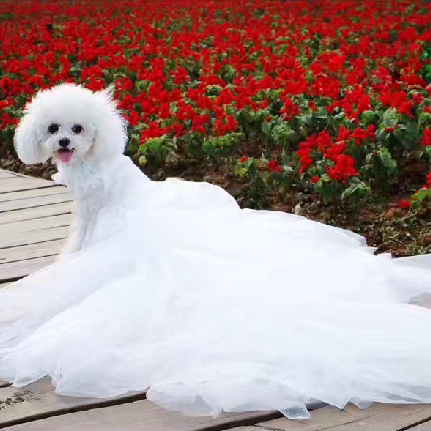 Wholesale luxury pet clothes dress for small <strong>dogs</strong>, customize clothes, pet wedding dresses and veils