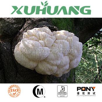 Lion's Mane mushroom extract/Lion's Mane mushroom powder