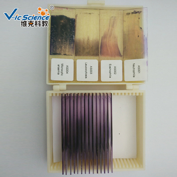 animal and human blood smear prepared slide for teaching buy