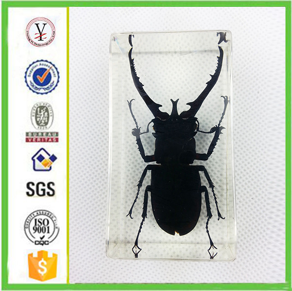 factory custom Creative real insects in resin
