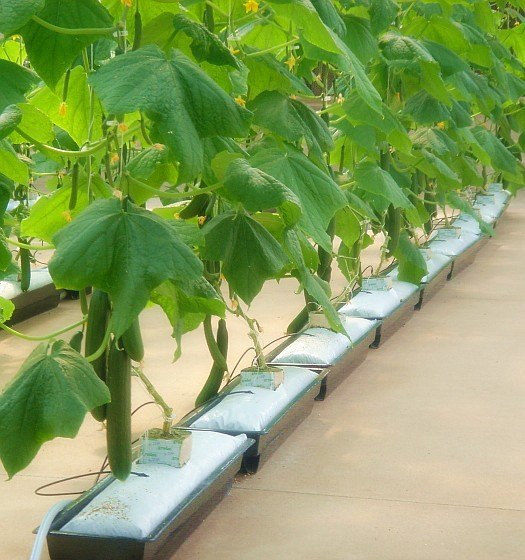 Dutch buckets for sale aquaponics system and bato for Aquaponics systems for sale